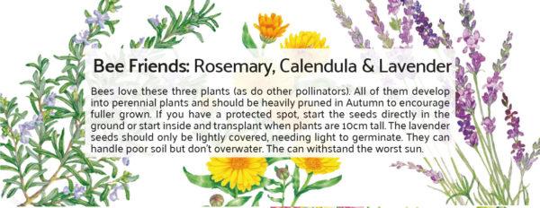 Botanical Workshop Seeds Bee Friends