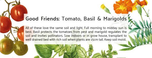 Botanical Workshop Seeds Good Friends