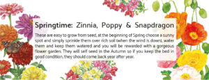 Botanical Workshop Seeds Springtime